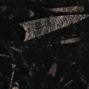 Fossil_Black_Marmor